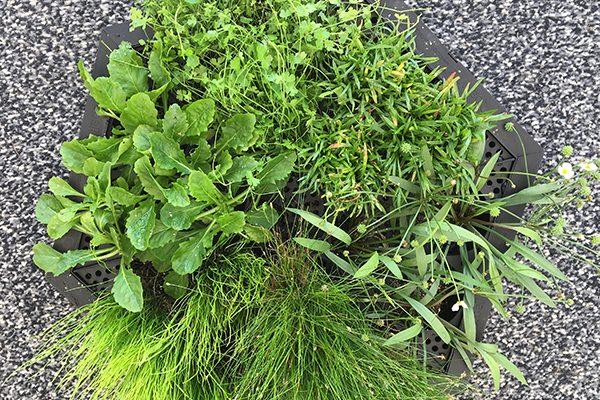 IslaPlanta Teich-Schwimminsel mit bewurzelten Pflanzen