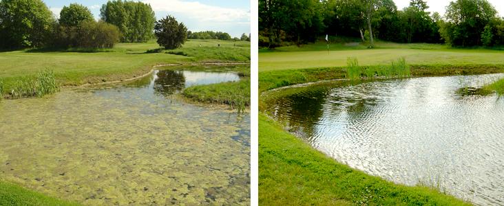 Wie bekommt man klares Teichwasser und wie hält man es klar?