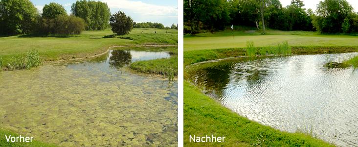 Teichpflege Truber Teich Algen Kranke Fische Bell Vital