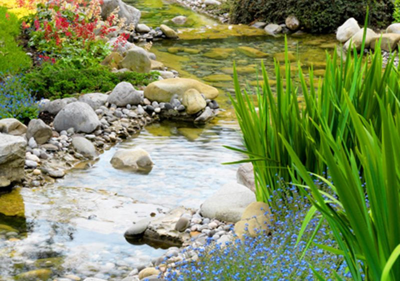 Wasserreinigung: Reines Wasser im Teich