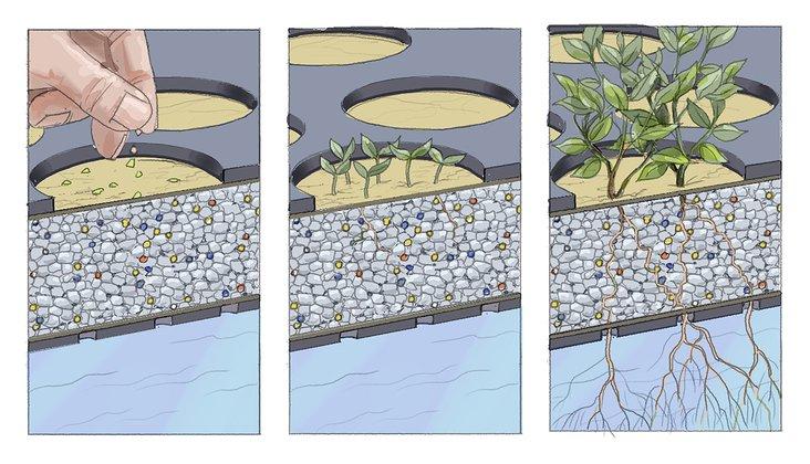 Können Wasserpflanzen Teiche klären?