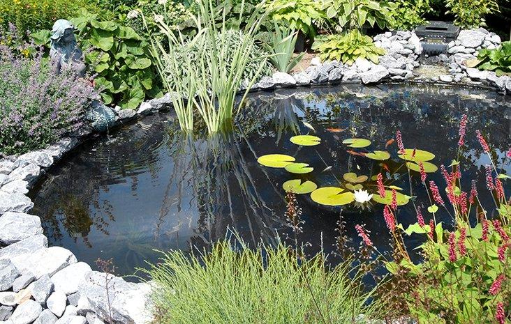 Aquascaping: Teichpflege leicht gemacht