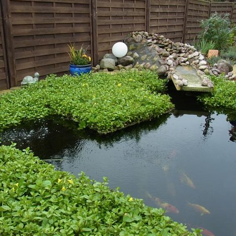 Koiteich mit IslaPlanta Pflanzen-Schwimminseln Klares Wasser, gesunde Fische.