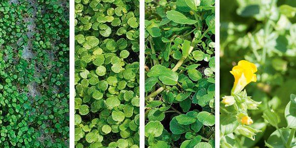 Wie man Pflanzen für sich arbeiten lassen kann